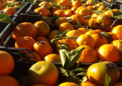mandarinas a granel - valencia granados