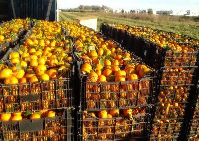 cajones mandarinas -valencia granados