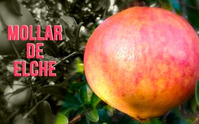 Mollar de Elche, ¡explosión de sabor y salud!